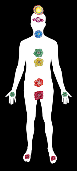diagram of radices on human body