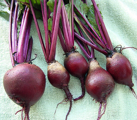 'Red Ace' Beets