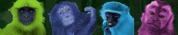 Four monkeys with flourescent fur: lime, indigo, cyan, fuschia