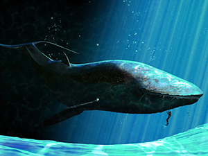 photo of a whale underwater