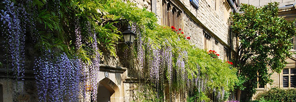 Oxford windowboxes
