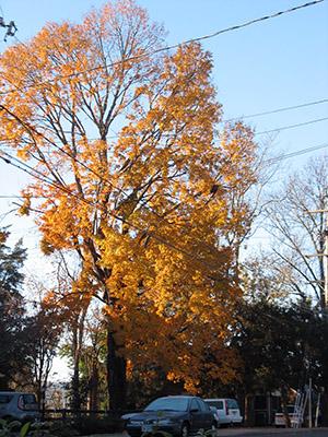 sunny-tree-2-300-px